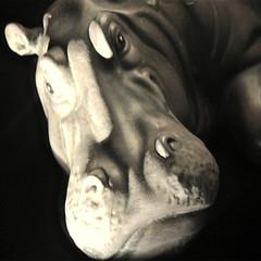 www.unaialberdi.com (UNAI ALBERDI ALONSO) Tags: original animal nikon arte museo mirada estatua nadie hipopotamo figura d3000 tranuilidad