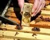 cd آموزشی پرورش زنبور عسل (iranpros) Tags: تبلیغ سایت زنبور عسل پرورش کندو ملکه زنبورعسل آموزشی فروشگاهاینترنتی cdآموزشیپرورشزنبورعسل آموزشپرورشزنبورعسل پرورشزنبورعسل خریدزنبور شاهملکه فروشگاهیوحنّا کاربازنبورعسل