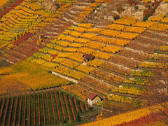 Terraced Vineyard in Autumn - Stuttgart, Germany (Batikart) Tags: autumn house mountain plant tree fall nature berg field yellow rock wall canon germany landscape geotagged deutschland golden vineyard flora europa europe pattern quilt riverside wine stuttgart herbst landwirtschaft natur terraces feld terrasse structures tranquility fromabove line rows outlook recreation agriculture relaxation ursula landschaft baum muster grapevine cultivation mauer weinberg badcannstatt felsen sander huser g11 badenwrttemberg 2015 linien reihen weinstcke 200faves 300faves batikart steinhaldenfeld canonpowershotg11