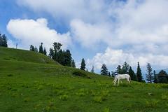 paye meadows (hamidrashidkhan) Tags: nature clouds landscapes nikon meadows