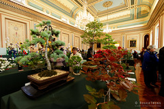 20161105-15-Open House Hobart - Town Hall floral show (Roger T Wong) Tags: 2016 australia hobart openhouse rogertwong sel1635z sony1635 sonya7ii sonyalpha7ii sonyfe1635mmf4zaosscarlzeissvariotessart sonyilce7m2 tasmania townhall architecture building floraldisplay