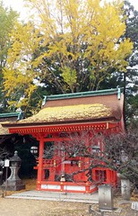 20151125_105738 (Freddy Pooh) Tags: kyoto japon kitanotenmangushrine