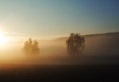 Misty morning (Kat-i) Tags: trees mist nature morninglight nebel natur kati bume katharina morgensonne 2015 nikon1v1