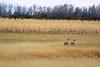 South Dakota Luxury Pheasant Hunt - Gettysburg 64