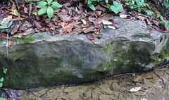 Boggs Limestone (Pottsville Group, Pennsylvanian; Blunt Run, Muskingum County, Ohio, USA) 8 (James St. John) Tags: county ohio group run limestone member blunt muskingum fossiliferous boggs pottsville pennsylvanian