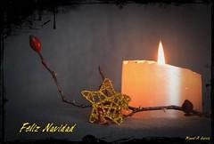 Feliz Navidad........Merry Christmas,Joyeux Nol,Frohe Weihnachten,Bon Nadal,Feliz Nadal,Vrolijk kerstfeest,Buon Natale,God jul, , (Miguel. (respenda)) Tags: merrychristmas feliznavidad buonnatale froheweihnachten godjul joyeuxnol bonnadal vrolijkkerstfeest  feliznadal