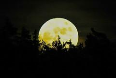 Full moon rising ... (Kat-i) Tags: weihnachten bayern deutschland fullmoon moonrise kati katharina vollmond 2015 mondaufgang furth nikon1v1