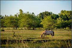San Antonio de Areco (Totugj) Tags: nikon d5100 paisaje natural verde provinciadebuenosaires argentina campo