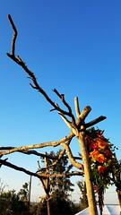 Driftwood beauty (karmenbizet73) Tags: driftwood photography photodevelopment amateurphotographer spirit love unity handmade goodintentions colors skywatch random eyespy 2016366photos 129366