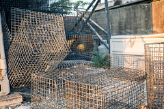 Cages (Dave Fine) Tags: animal cage lobster fish port harbor catching bmore nets sea md baltimore maryland catcher net outside unitedstates marine trap mesh outdoors crab usa transitstation harbour fisherman haven us