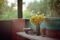 Warm summer evening (Andrey Timofeev) Tags: canon t70 mc zenitarm2s m2s 50 50mm 2 expired fujifilm superia xtra 400 iso processbefore20078 june2016 c41 35mm 35  manual focus analog russia photography  negative film grain  light   tones   bokeh  mood  atmosphere  color colours  vintage  time  home  still life  summer  country house  warm evening   sunset  sun  tutsan  strawberry  bouquet  m42tocanonfd adapter