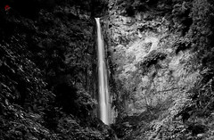 In Bw because i love it !!! Watterfall da Ribeira Quente So Miguel island , Azores ... (MiguelSantosi) Tags: waterfall waterfalllovers waterfallpics nature ndfilter longexposurephotography longexposureshots longexposure bwlandscape bwlovers bwphotos bwcaptures bwshots bwphotography bnwphotography bnwsaomiguelazores bnwworld bnwsociety bnwcaptures blackandwhitephotography blackandwhitecaptures blackandwhitephoto blackandwhiteshot blackandwhitephotograhy blackandwhiteshots blackandwhitephotogaphy blackandwhite blackandwhitelovers pretoebranco pretoebrancofotografia bnw azores saomiguelisland acores trilhos trails naturesecrets naturalbeauty cascata cachoeira yinyang