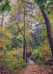 Afternoon Walk (JMS2) Tags: forest nature trail boardwalk leaves fall autumn foliage