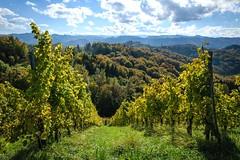Wein und Wlder (www.textbox.at) Tags: weinberg austria steiermark sterreich sdsteiermark sonne wolken weinzeile reben wald hgel berge gegenlicht