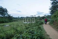 H504_3564 (bandashing) Tags: teagardens green lush field path tree bush tea sylhet manchester england bangladesh bandashing aoa akhtarowaisahmed socialdocumentary
