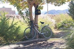Bicycle under a tree near Kasbah Taourirt in Ouarzazate (John Englart (Takver)) Tags: morocco ouarzazate kasbah bicycle