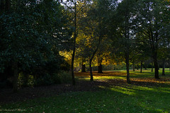 Autumn glow (Rourkeor) Tags: glasgow park autumn trees glow sunshine shadows glitter leaves sony sonyrx1r rx1r fullframe carlzeiss zeiss sonnar t 35mm scotland unitedkingdom uk ecosse