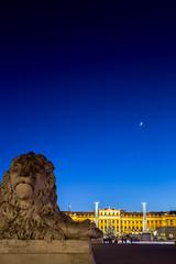 Schonbrunn Palace (holzer_r) Tags: schnbrunn vienna austria imperial palace lion lwe schloss sonnenuntergang sundown dusk moon sky langzeitbelichtung christmas market weihnachtsmarkt christmastree weihnachtsbaum