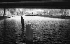 Linear ducks (Arne Kuilman) Tags: pentax k1000 50mm 50mmf14 analogue analoog film scan amsterdam nederland netherlands ilford xp2 water highway snelweg ducks