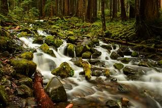 Sol Duc Falls Hike-Creek