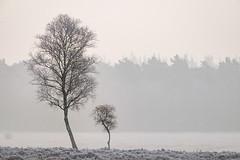 Planken Wambuis (Arnold van Wijk) Tags: bos forest trees autumn herfst boom bomen frost voorst ede gelderland plankenwambuis oudreemst