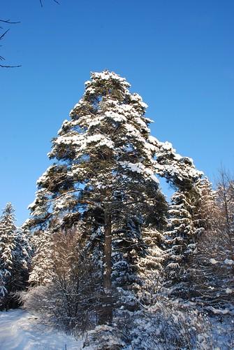 Snowy winter ©  Andrey