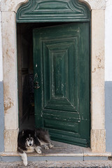 The Guardian (swordscookie back and trying to catch up!) Tags: faro algarve portugal door dog citygate oldtown narrowstreets cobbled sets doorstep comfortable