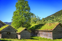 113239_CB_2268 (aud.watson) Tags: europe norway sognogfjordane sunnfjord museum oldvillage oldsettlement historicvillage woodenhouse thatchedroof route e39