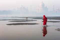 MYI_6067 (yaman ibrahim) Tags: india agra nikon d3 tajmahal yamuna morning water saree mis misty