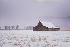 brokedown palace... (J. Kaphan Studios) Tags: fujixt1 grandtetonnationalpark jacksonhole wyoming oldbarns snow winter ambientlight trees landscape landscapephotography 50mm nifty50