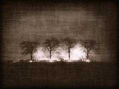 gx680_skogis_001_raw-1-2 (roos@swedish.photography) Tags: skogskyrkogrden memorial grove stockholm sweden fuji gx680 cloth trees light death