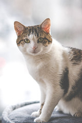 Choupette - Saturday morning shoot (Stephane Rossignol) Tags: chat cat tabby tabbycat neko animal animaldecompanie portrait gatto gato katze kot