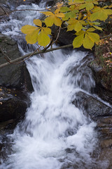 stream (marcin1868) Tags: stream brook forest autumn relaxation water nature nikond7200 nikon d7200 50mmf18d 50mm fall fog leaf rock grass green yellow