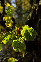 Schlossgarten Mnster Nov. 2016_19 (dcs 0104) Tags: schloss johann conrad schlaun westflischewilhelmsuniversitt universitt mnster nikon d3100 d800 nikkor 50 50mm 18 g 55300 55300mm 3556 vr flora baum strauch blatt arbre arbuste heester bush busch feuille leaf himmel sky ciel hemel botanischergarten garten garden jardin tuin herfst herbst autumn automne deutschland westfalen westfalia duitsland allemagne germany