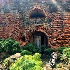 Maria Island. Old kiln.