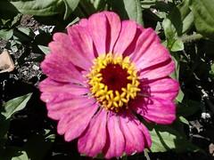 DSC_0015 (Jozef rulof) Tags: roluf jozef jose flor vermelho redgente familia caminhos passeio espiritual jozefrulof