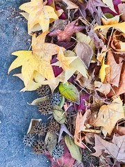 Parking Lot Pic   (Explored, 12/4/16) (BetsyW566) Tags: fall autumn sacramento california leaves textures gold yellow red orange green parkinglot windblown