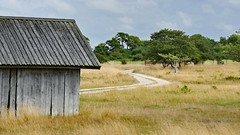 Gotland- Savanna (Don Bello Photography) Tags: sommer 2015 inselgotland gotland savanna museigrdenpetes strand weg htte acdsee acdseeultimate8 panasonicphotographer lumixphotographer panasonicfz1000 lumixfz1000 reinhardbellmann donbello donbellophotography 1000views 2000views 3000views schweden 4000views 5000views 100favorites 6000views 50favorites 10000views scandinavien 1500views 15000views europa europe fz1000