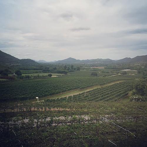 Thai #winary @ Hua Hin #wine #HuaHin #thai #ホアヒン