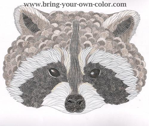 Raccoon From Animal Kingdom By Millie Marlotta