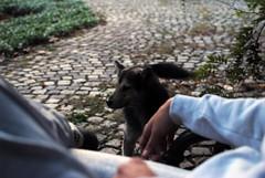 (Dalibor erkov) Tags: life street autumn dog color cat details workshop leisure nifoto