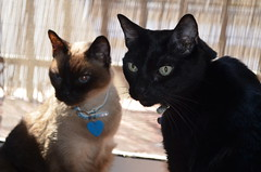 Brothers cats (BambanellaM) Tags: world pictures family music favorite cats baby pets cute home dogs boyfriend girl beautiful animals sisters myself puppy beard hearts happy photography nice eyes moments day remember different cosplay brothers weekend style calm lovers dreams instant week summertime sweetheart truelove pinup goodyear bestfriends sons bambam somebody niceday gaminglife ilovemydog lightbrown lovebaby manofmydreams otakugirl hairbrown housband oldyears tagsforlife