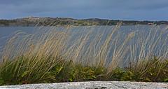 Söndagspromenad i Äggdal naturskyddsområde. Nature conservation area near Kungalv, Sweden (@backersgard) Tags: autumn coast october höst bohuslän 2015 kungälv tofta äggdal