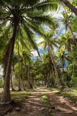 Happy Trails (duncan_mclean) Tags: trees fiji island track path palm palmtrees trail tropical lush coconuts savasi savasiisland