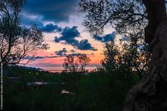 Sunset in the olive grove       (constantiner) Tags: sea me bar landscape horizon adriatic montenegro jadran    mediterian    crnagora       mediteran