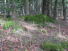 R0023189 (joachimelbing) Tags: adlerhorst geotop oberlemp