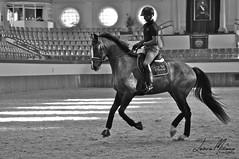 Marc Vila y El-Passo (lminyano) Tags: horse animal caballo cheval pferd dressage galope hipica equestrianism dressyr equitacion pistacubierta domaclasica