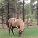 Hirsche im Yosemite National Park