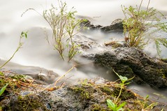 (Jeremy Lagura) Tags: longexposure plants nature water rain creek landscape stream long exposure flood wildlife nd features flowing plantlife riber flowingwater