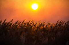 Evening Sun (pap-x) Tags: sunset sun nature field canon landscape evening wheat greece thessaloniki tele kalochori macedoniagreece